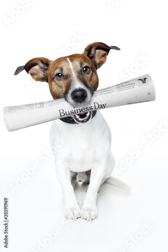 dog bringing newspaper
