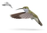 Small Colibri in flight stylized polygonal model poster