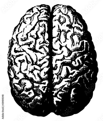 Engraved illustrations of brain.