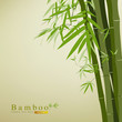Bamboo green leaf vector illustration