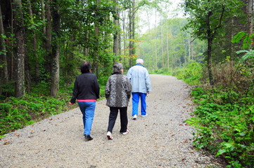 people walking on path in forest