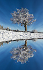 winter tree with reflection in lake