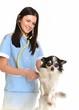 médecin vétérinaire avec chihuahua isolé