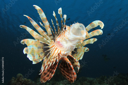 Lionfish with mouth wide open