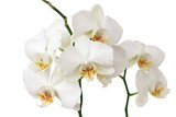Fototapeta roślina - kwitnący - Kwiat