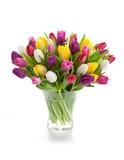 Fototapety Spring tulips