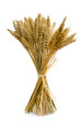 Leinwanddruck Bild - Gebündelte Weizenähren