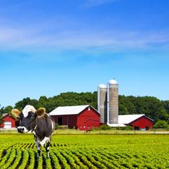 Mad Cows Milk Farm
