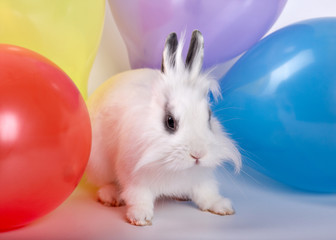Rabbit and ballons