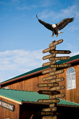 american bald eagle landing on milepost in homer alaska
