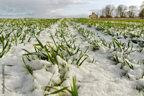 Snow on the land.