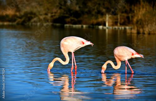 Foto op Canvas Flamingo deux flamants roses