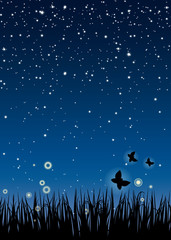 Nuit et Nature