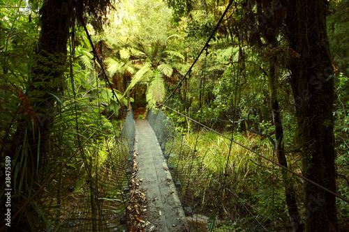 Tropical forest © Stillfx