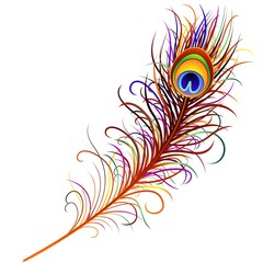 Piuma di Pavone-Peacock Feather-Vector