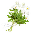 Bouquet of white anemone flowers