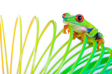 Colorful Frog on a spring, coil toy