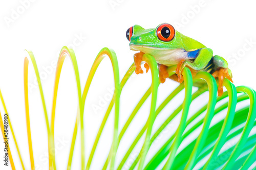 Papiers peints Grenouille colorful frog on a spring
