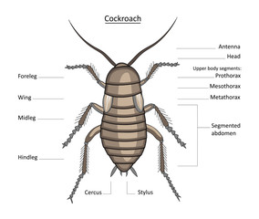 Cockroach in color with easily removable labels
