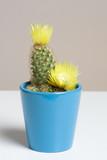 gelber Kaktus