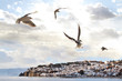 Gull flying over a blue sky above the Ohrid Lake, Macedonia.