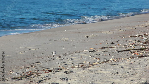 Shelling beach birds