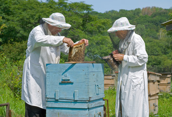 Beekeepers at hive 9
