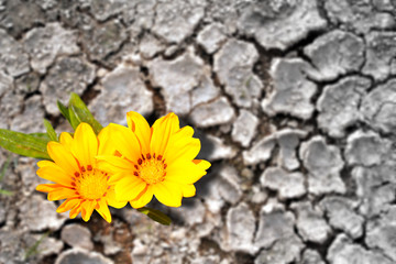 Concept of persistence. Flowers blooming in arid land