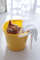 Ginger cat sitting in yellow bucket