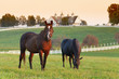 Leinwanddruck Bild - Horse Farm