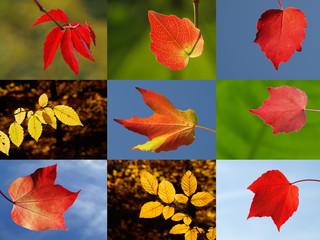 Herbstblattleuchten
