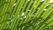 Cycad and wind