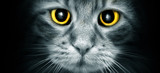 Cat Eyes - 38524172