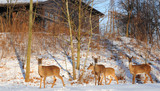 Family of deer stands alert near a park shelter