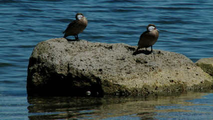 Birds on the rock in the sea