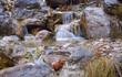 Mountain stream in Crimea