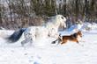 Fototapeten,pferd,weiß,winter,tier