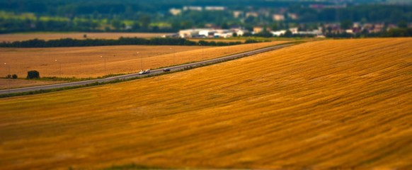 Ripe wheat field with road
