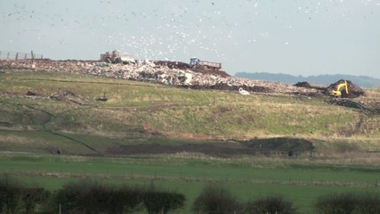 Landfill site in action with bulldozers and birds flying around