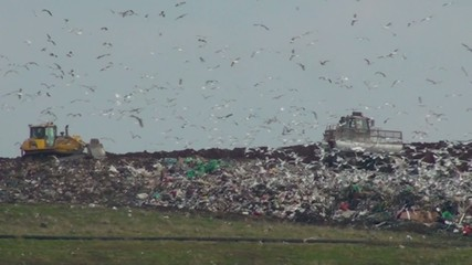 Landfill site in action using machinery with birds flying around