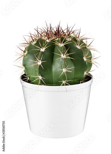 Keuken foto achterwand Cactus 00361STN