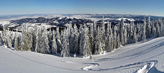 Trees covered with hoarfrost and snow in mountains - panorama