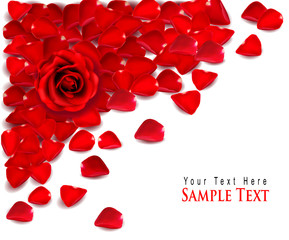 Background of red rose petals and rose. Vector