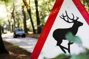 deer warning road sign countryside