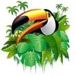 Fototapeten,tukan,vögel,exotisch,tropisch