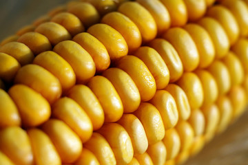 genetic modify corn zea macro closeup