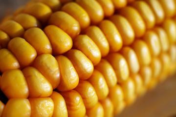 corn zea