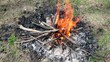 Bonfire of the branches burns on grass
