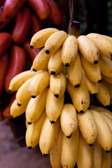 Bananas Or Plantains