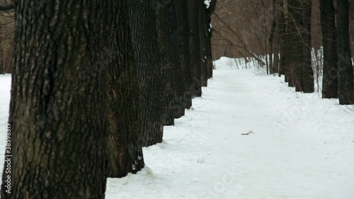 Man random snake runs among trees on park alley at winter day